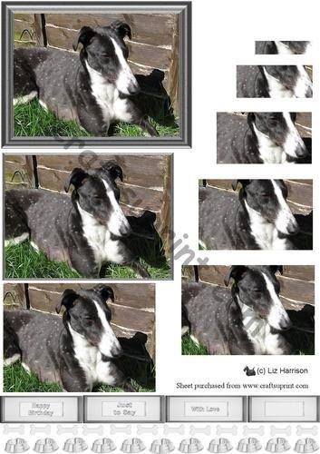 greyhound-dog-pyramid-liz-harrison-di-scena