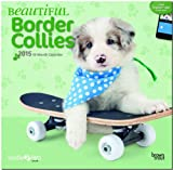 Beautiful Border Collies 18-Month 2015 Calendar