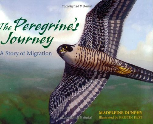 The Peregrine's Journey: A Story of Migration