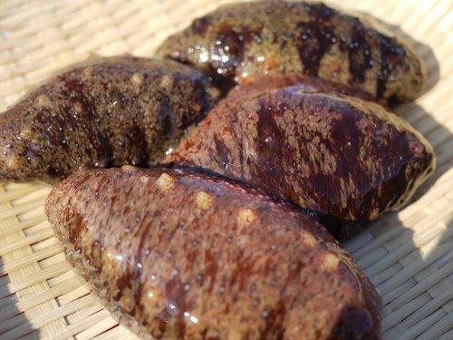 伊勢湾・三河湾産 活赤ナマコ(海鼠・海参・なまこ・このわた) 1kg 5匹以上