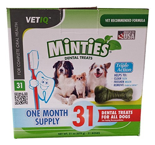 minties-dental-treats-for-all-dogs-one-month-supply-31-treats-net-wt-31oz-by-minties