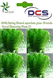 DCS (048) Spring Bonsai aquarium grass 10 Seeds Novel Blooming Plant-23