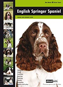 Opinion you english springer spaniel anal glands
