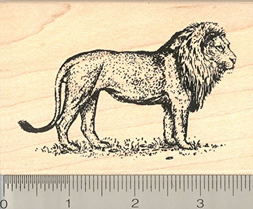 Lion Rubber Stamp, Male Big Cat on the Prowl, Large