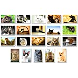 CATS postcard set of 20. Made in USA. Post cards variety pack.