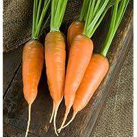 Carrot Danvers DGS30010A (Orange) 200 Organic Heirloom Seeds by David's Garden Seeds