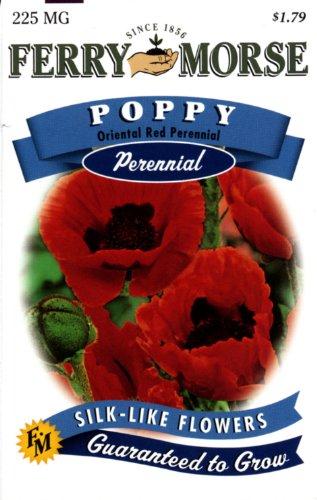 Ferry-Morse 1127 Poppy Perennial Flower Seeds, Oriental Perennial Red (225 Milligram Packet)
