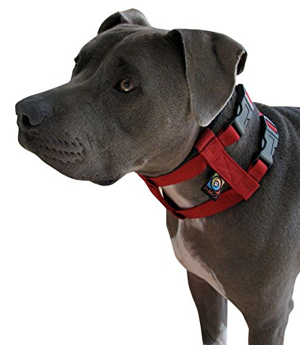 original-illusion-collar-trainingshalsband-leine-des-amerikanischen-hundeflusterer-cesar-millan-gros