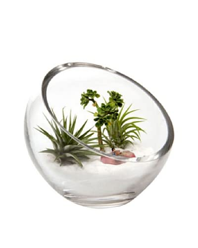 Chive Glass Terrarium Bowl