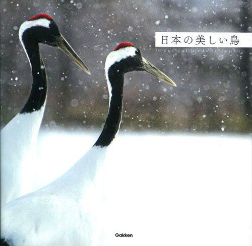 日本の美しい鳥