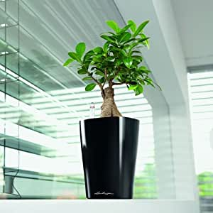 Round lechuza deltini self watering indoor for Indoor gardening amazon