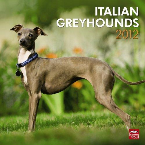 Greyhounds, Italian 2012 Square 12X12 Wall Calendar