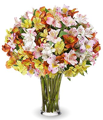 Flowers - Radiant Peruvian Lilies!