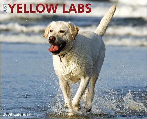 Pictures Of Yellow Labs. Just Yellow Labs Wall