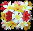 26x26 inch Acrylic Painting Original Hand Painted Medium Size Frangipani Hibiscus Botanical Floral
