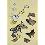 Butterflies. Japan, 19th century (Print On Demand)