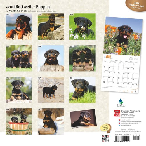 Rottweiler Puppies 2016 Wall
