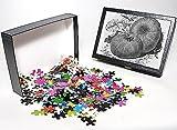 Photo Jigsaw Puzzle Of Pumpkin Spanish G...