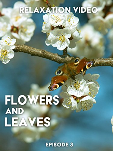 Relaxation Video: Flowers and Leaves. Episode 3