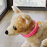 BuW Retractable Flea prevention plastic collar for pets dogs ,practical and fashion Pet Dog Supplies