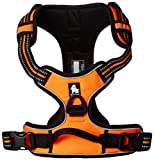 """Chai's Choice Pet Products 27""""-32"""" Best Front Range No-Pull Dog Harness, Large, Orange"""