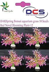 DCS (048) Spring Bonsai aquarium grass 10 Seeds Grass-w-Red Novel Blooming Plant-12