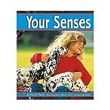Your Senses (Senses (Capstone))