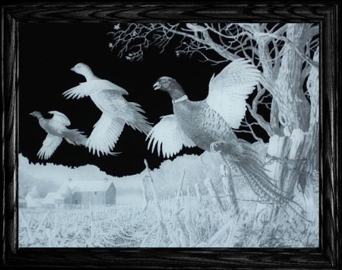 High Field Flush PHEASANTS High Definition Acid Etched Glass Decor Frame