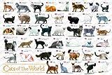 めざせパズルの達人 (ペット・コレクション) 世界の猫図鑑