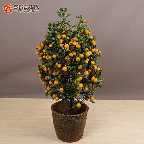 100pcs-bag-balcone-patio-vaso-di-frutta-alberi-piantati-semi-kumquat-semi-arancione-semi-mandarino-a