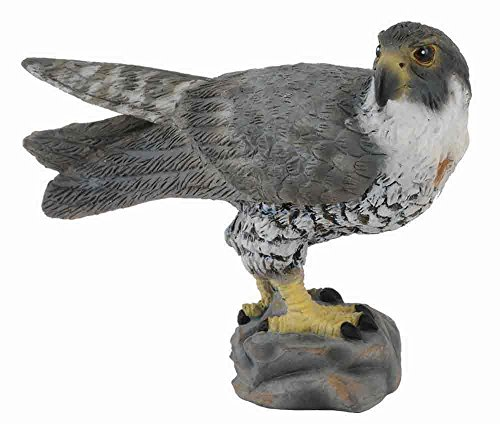 Falcon Natural