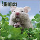 Hamsters 2014 Wall BrownTrout