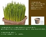 エイム 犬と猫が好きな草 栽培用セット
