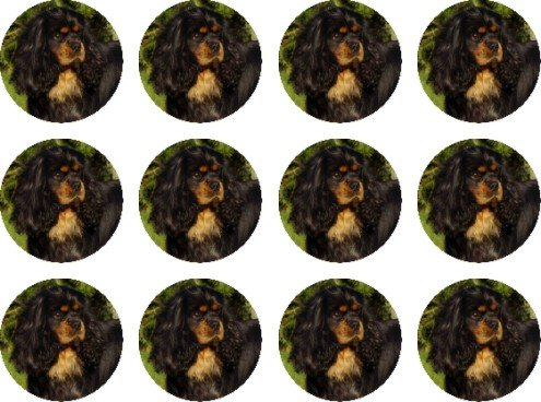 cavalier-king-charles-spaniel-bk-tan-edible-cake-toppers-12-of-38mm-15inch-57