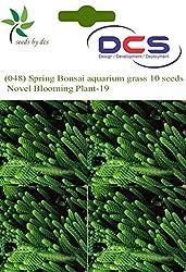 DCS (048) Spring Bonsai aquarium grass 10 Seeds Mosa Black Novel Blooming Plant-19