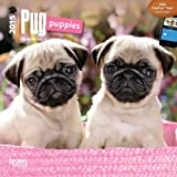 Pug Puppies 2015 Mini 7x7