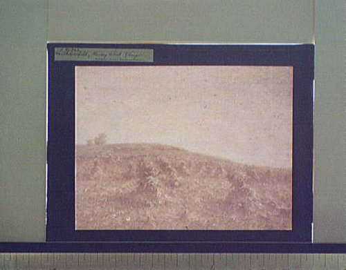 Photo: Cornfield,agricultural,food,plants,HW Ranger,L Glover,Detroit Publishing,191