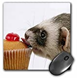 3dRose LLC 8 x 8 x 0.25 Inches Mouse Pad, Ferret Eating Cupcake (mp_17288_1)