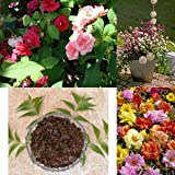 SUMMER FLOWER SEEDS (PACK OF 5) And ORGANIC MANURE (NEEM BASE) By KRAFT SEEDS (Portulaca, Balsam, Zinnia, Gomphrena...