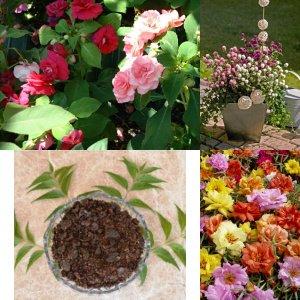 SUMMER FLOWER SEEDS (PACK OF 5) And ORGANIC MANURE (NEEM BASE) By KRAFT SEEDS (Portulaca, Balsam, Zinnia, Gomphrena...