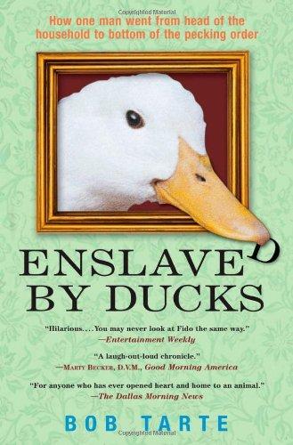 Enslaved by Ducks, Bob Tarte