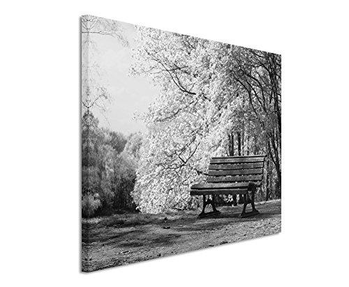 50x70cm Leinwandbild schwarz weiß in Topqualität Blühende Bäume Bank