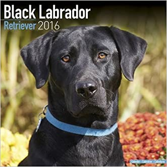 Black Labrador Retriever Calendar - Only Dog Breed Black Labrador Retrievers Calendar - 2016 Wall calendars - Dog Calendars - Monthly Wall Calendar by Avonside