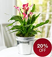 Calla Lily Tin Planter
