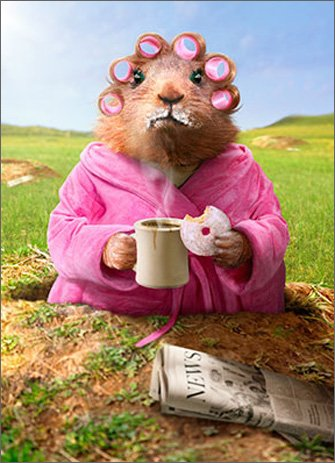 Morning Ground Hog Funny Just for Fun Card (Avanti Coffee Cups compare prices)