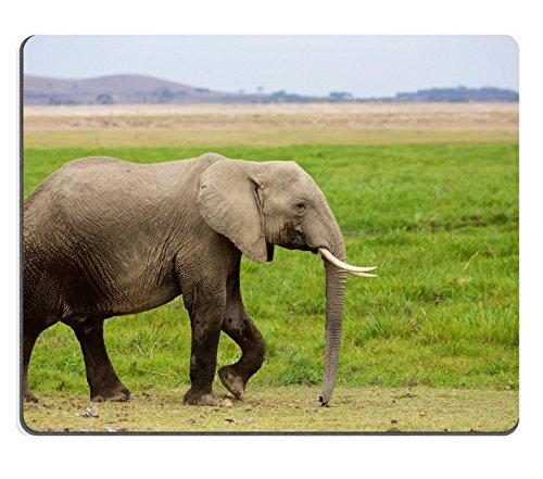 jun-xt-mousepad-kamil-scat-petsmart-adoption-centre-june-6-2016-natural-rubber-material-image-272501