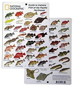 National geographic guide to inshore fish for Pacific northwest fish