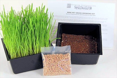 Mini Organic Pet Grass Kit - Grow Wheatgrass for Pets: Dog, Cat, Bird, Rabbit, More - Includes Trays, Soil, Wheat Grass Seeds, Instructions by Wheatgrass Kits (Wheatgrass Kit Organic compare prices)