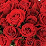 Send Fresh Cut Bulk Flowers - 200 Long Stem Red Roses Wholesale