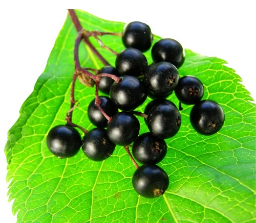 8 Oz Elderberry Powder 10:1 Extract 10X Stronger Immune Defense